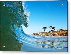 California Curl Acrylic Print by Paul Topp