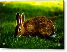 California Hare - 0291 Acrylic Print by James Ahn