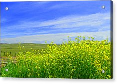 California In Spring Acrylic Print by Rima Biswas