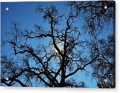 California Oak Sun Tree Acrylic Print