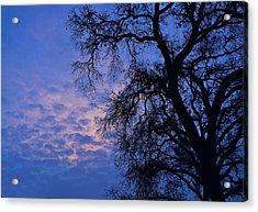 California Oak Sunrise Acrylic Print