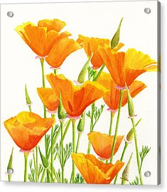 California Poppies Square Design Acrylic Print