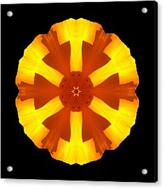 Acrylic Print featuring the photograph California Poppy Flower Mandala by David J Bookbinder
