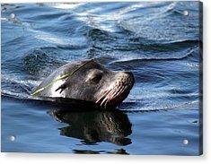 California Sea Lion  Acrylic Print by Valerie Broesch