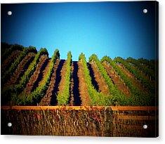 California Vineyard Acrylic Print by Joyce Kimble Smith