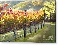 California Vineyard Series Morning In The Vineyard Acrylic Print by Artist and Photographer Laura Wrede