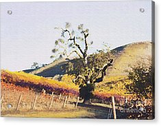 California Vineyard Series Oaks In The Vineyard Acrylic Print by Artist and Photographer Laura Wrede