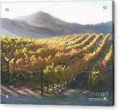 California Vineyard Series Vineyard In The Mist Acrylic Print by Artist and Photographer Laura Wrede