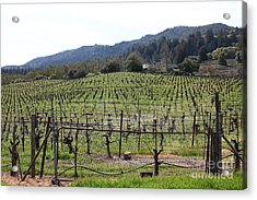 California Vineyards In Late Winter Just Before The Bloom 5d22088 Acrylic Print by Wingsdomain Art and Photography