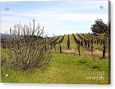 California Vineyards In Late Winter Just Before The Bloom 5d22121 Acrylic Print by Wingsdomain Art and Photography