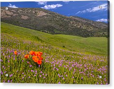 California Wildflowers Acrylic Print by Marc Crumpler