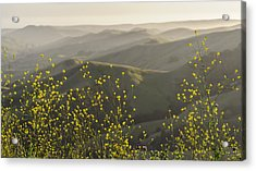 Acrylic Print featuring the photograph California Wildflowers by Steven Sparks