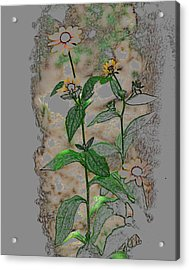 Acrylic Print featuring the photograph Call Me Daisy by Linda Segerson