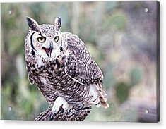 Acrylic Print featuring the photograph Call Of The Owl by Dan McManus