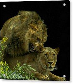 Call Of The Wild 2 Acrylic Print by Ernie Echols