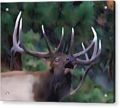 Call Of The Wild Acrylic Print by Shane Bechler
