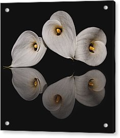 Calla Circle D4423 Acrylic Print by Wes and Dotty Weber