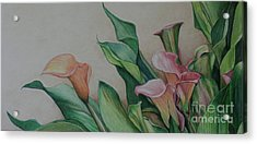 Calla Lilies Acrylic Print by Charlotte Yealey