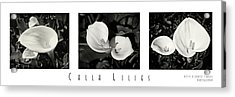 Calla Lilies Horizontal With Title And Nameplate Acrylic Print