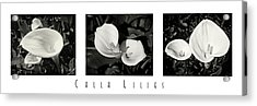 Calla Lilies Horizontal With Title Acrylic Print