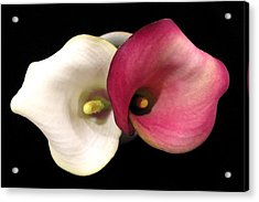 Acrylic Print featuring the photograph Calla Lilies by Patricia Januszkiewicz