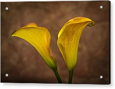 Acrylic Print featuring the photograph Calla Lilies by Sebastian Musial