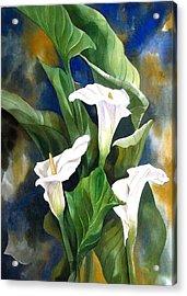Calla Lily Acrylic Print by Alfred Ng
