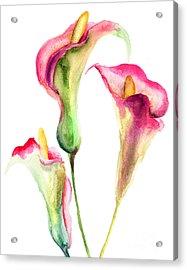 Calla Lily Flowers Acrylic Print