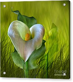Acrylic Print featuring the digital art Calla Lily Glow by Shirley Mangini