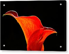 Calla Lily High Contrast Acrylic Print by Scott Lyons