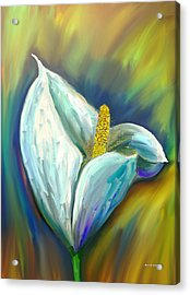 Calla Lily In The Morning Light Acrylic Print by Angela A Stanton