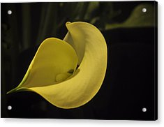 Calla Lily Iv Acrylic Print by Ron White