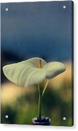 Calla Lily Acrylic Print by Marco Oliveira