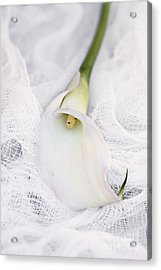 Calla Lily On White Background Acrylic Print