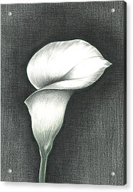 Acrylic Print featuring the photograph Calla Lily by Troy Levesque