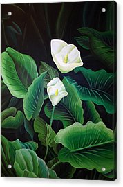 Calla Lily Acrylic Print by William Love