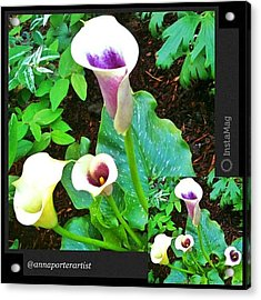 Callas And Green By @annaporterartist Acrylic Print