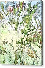 Callas Acrylic Print by Jennifer Woodworth
