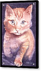 Callie's Cats Acrylic Print by Sarah Buell  Dowling