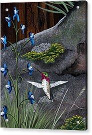 Calliope Hummingbird Acrylic Print by Jennifer Lake