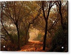 Calm Nature As Fantasy  Acrylic Print by Manjot Singh Sachdeva