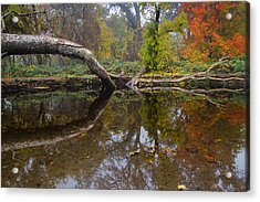Calm On Big Chico Creek Acrylic Print