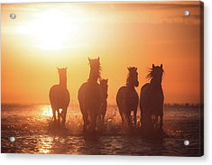 Camargue Angels Acrylic Print