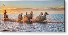 Camargue Horses II Acrylic Print
