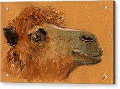 Camel Head Study Acrylic Print