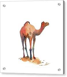 Camel I Acrylic Print