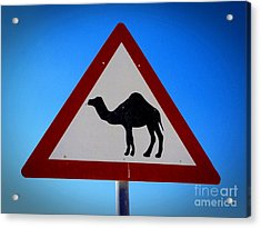 Acrylic Print featuring the photograph Camel Warning Road Sign by Henry Kowalski