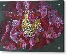 Camellia Rain Acrylic Print