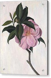 Camellia Acrylic Print by Ruth Addinall