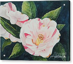 Camellia ...sold  Acrylic Print